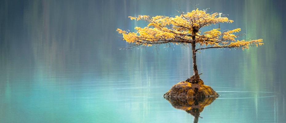 Bonsai tree growing on a rock, in the middle of clear blue lake